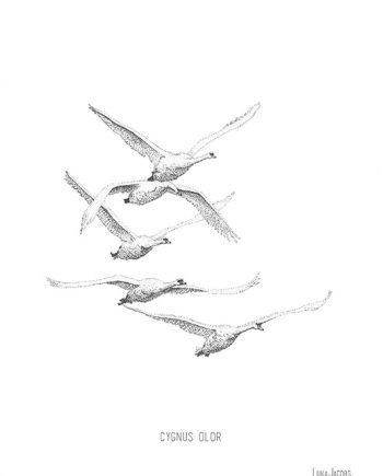 Rouwkaart met witte zwanen