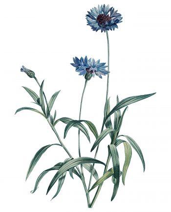 Duurzame ansichtkaarten met bloemen