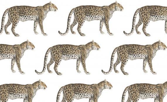 Stuur een duurzaam kaartje met luipaard