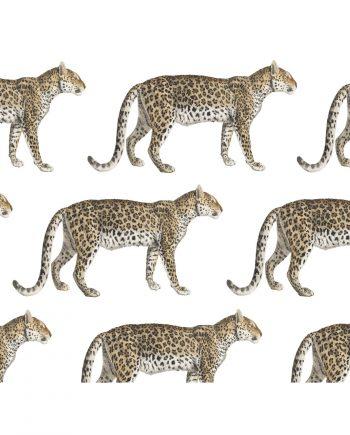 Stuur een ecofriendly kaartje met een luipaard