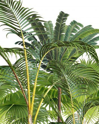 duurzame kaart palmbomen illustratie