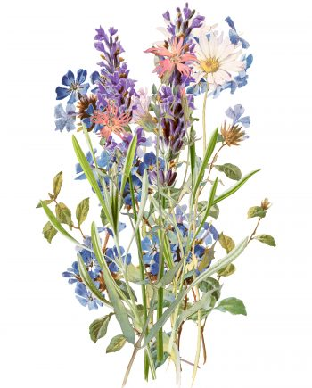 Duurzame kaart veldbloemen