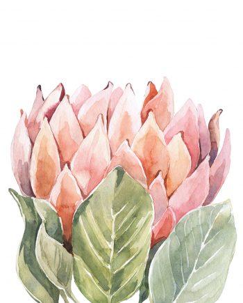 Duurzame kaart protea