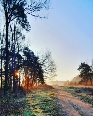 HAPPY MORNING 💛 The sun is up! . . . . . #dutchcaptures #mookstories #outsideisfree #secretescape #rsa_rural #wanderer #fotografie #naturephotography #visuals #intothewild #modernoutdoors #rsa_streetview #naturelovers #wanderlust #natuurfotografie #wildandfree #exploremore #wandering #goneoutside #heritage #buitenleven #wildandfree #earthexperience #liefleven #wandering #dutchwoods #riel#visitbrabant #visualstorytelling