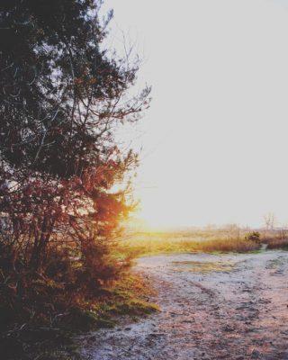 HAPPY MORNING 💛 The sun is up! . . . . . #dutchcaptures #mookstories #outsideisfree #secretescape #rsa_rural #wanderer #fotografie #naturephotography #visuals #intothewild #modernoutdoors #rsa_streetview #naturelovers #wanderlust #natuurfotografie #wildandfree #exploremore #wandering #goneoutside #heritage #buitenleven #wildandfree #earthexperience #liefleven #wandering #dutchwoods #riel#visitbrabant #visualstorytelling #goldenhour